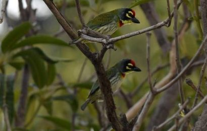 Chennaiites, see how many bird you can spot this weekend