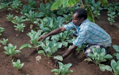 A world of opportunity awaits farmers online