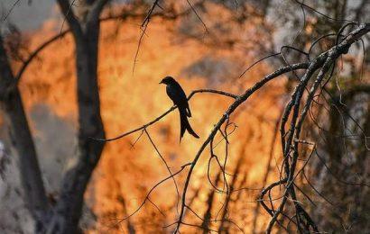 India's birds suffering dramatic population declines, warns scientific report