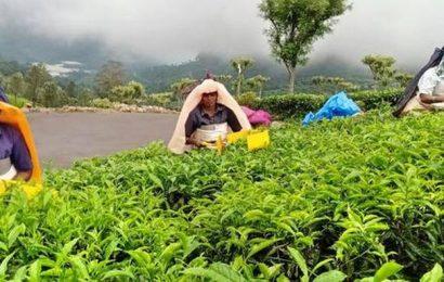 200 small farmers empowered through Trustea training programmes
