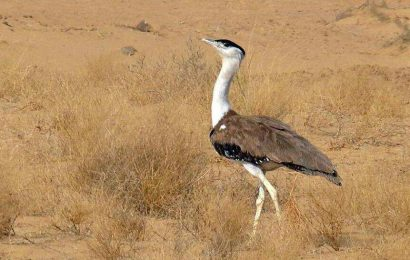 Hunting, poaching  biggest threats to migratory birds, according to report