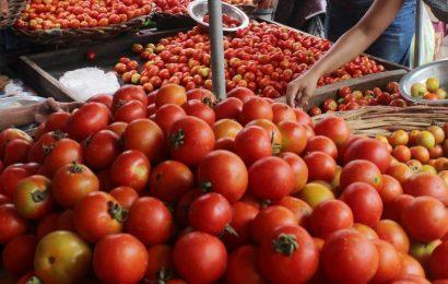 Tomato plants in France contaminated by ruinous tomato virus