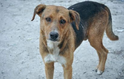 Ludhiana: Stray dog dragged by auto, thrown from rooftop, 3 held