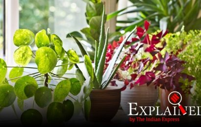 Explained: How plants dissipate excess sunlight as heat