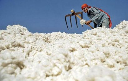 Centre to pay ₹1,061 cr. for cotton MSP operations in Maharashtra