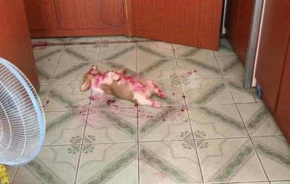 This isn't the crime scene this doggo will have you believe. Find out what's happening