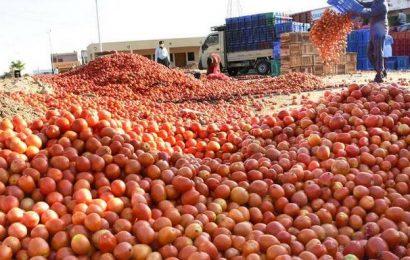 COVID-19 impact: In despair, farmers destroy crops in Karnataka