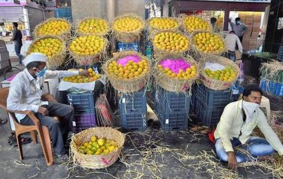Bitter season for mango farmers as price dips despite better quality