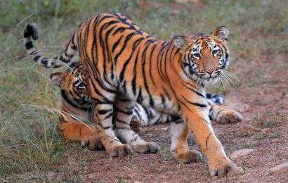 NWBL's nod for road through Arunachal tiger reserve seen as necessary evil