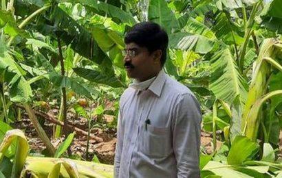 Heavy rains damage crops in Mandya