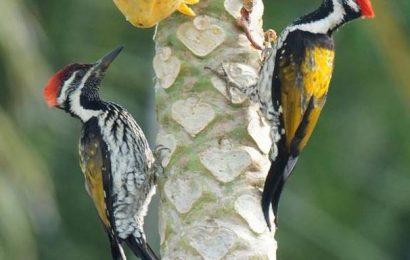 Locating birds in Coimbatore to get easier