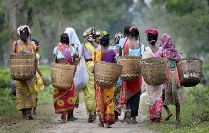 Work resumes at Assam tea gardens after a fortnight