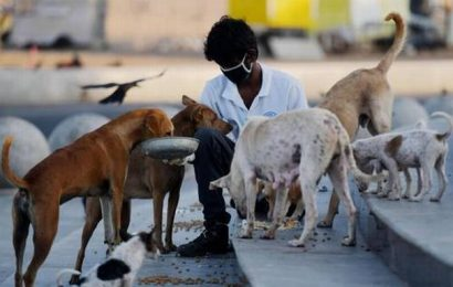 Watch | Animal lovers feed hungry strays