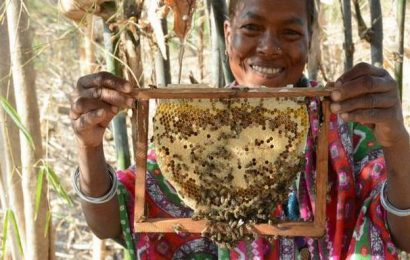 Indian honey bees need some love