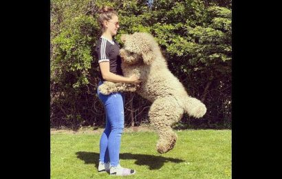 Huge 6-foot-tall dog still thinks he's a puppy. His pics will make you want to hug him