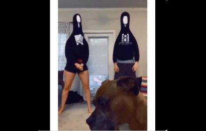 Dog's reaction to humans doing mannequin head dance is priceless. Is it thinking 'are my humans broken?'