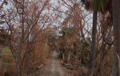 In Amphan's trail of destruction, Sunderbans turn red, yellow