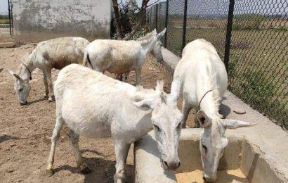 Owners abandon Char Dham pack animals in Uttarakhand as lockdown bites