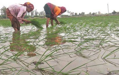 Insurance worries before Kharif: Maharashtra reports record claim settlement