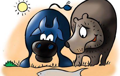 Beware of the 'bull trap' in a bear market, investors warned