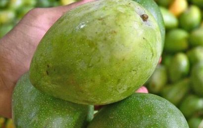 Mangoes at your doorstep in Chennai: A complete guide