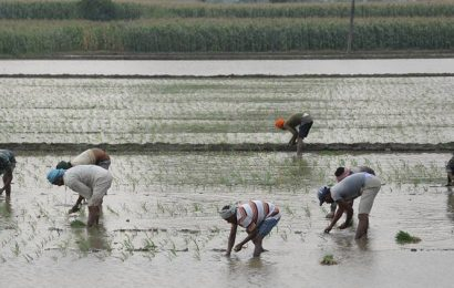 Paddy sowing begins in Punjab amid labour shortage