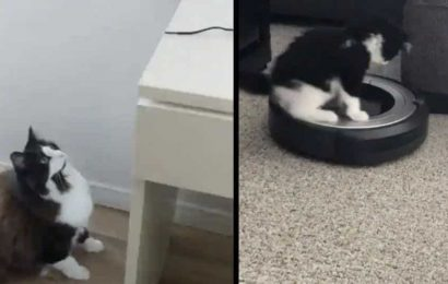 These cat videos are so cute they may go down in hiss-tory. Watch