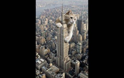 Man photoshops cat onto the Empire State Building. Twitter loses its cool
