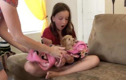 Child gets a 10-week-old puppy. Her reaction is priceless. Watch