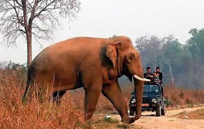 Another elephant found dead in Odisha forest, bullet marks on its body