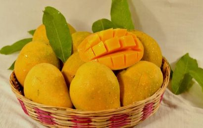Watch   Save the Indian Mango: How farmers are hoping to tide over COVID-19 crisis