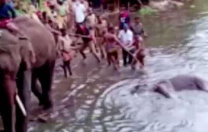 2 held in connection with pregnant elephant's death in Kerala