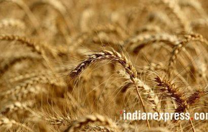 Despite pandemic, 55% kharif sowing complete in Punjab