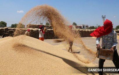 Madhya Pradesh surpasses Punjab in wheat procurement