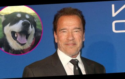 Arnold Schwarzenegger's New Dog Is Named After 1 of His Iconic Characters