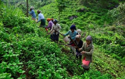 Tribal belts, reserve forests will not be touched: Assam Minister