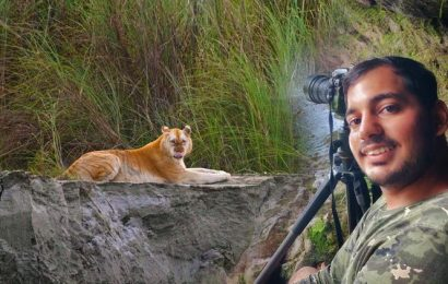 Assam's 'Golden Tiger' sighting: Not a sign of joy, but concern, says photographer