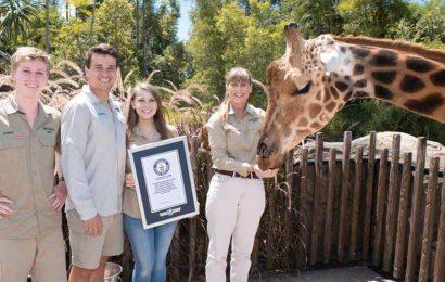 Meet the world's tallest giraffe. Bindi Irwin shares happy announcement