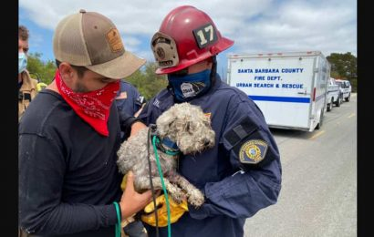 Firefighters rescue dog stuck in drainpipe for 3 days, people shower praise