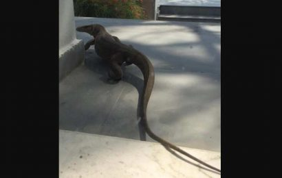 Monitor lizard spotted in a home in Delhi, people have thoughts