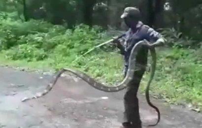 15-feet-long King Cobra rescued in Tamil Nadu, netizens amazed
