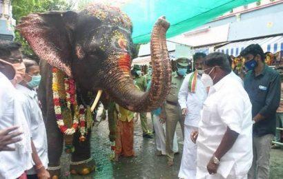Elephant brought back to Manakula Vinayagar temple