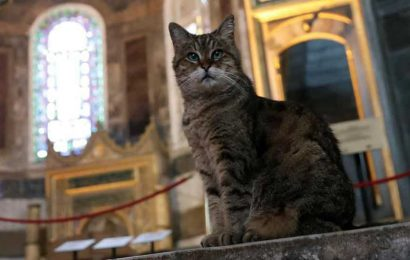 Insta-famous Gli the cat can stay even as Istanbul's Hagia Sophia changes