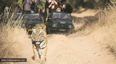 Chandrapur: Farmer killed in suspected tiger attack at Brahmapuri forest division