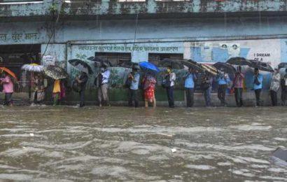Mangroves destruction to blame for flooding of Mumbai: Experts