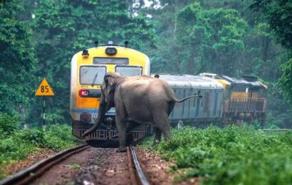 SNAPPED! When an elephant almost got hit by a train