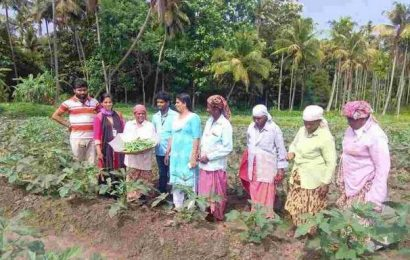 Now, young volunteers to help farmers