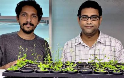 IISER Bhopal scientists' study on seed germination may lead to crop improvement
