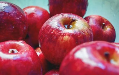 Himachal Pradesh cold stores cut apple target, blame hail, poor produce