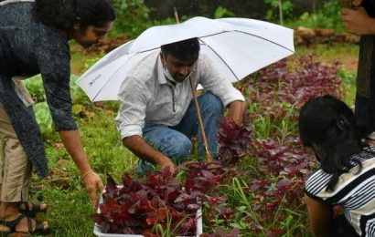 How one man in Kochi is putting some of the city's vacant plots to use by farming vegetables, organically